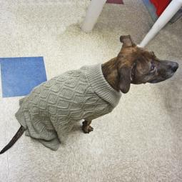 XXL Taupe Fisherman Dog Sweater