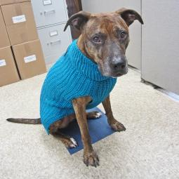 XL Teal Corbin's Cable Dog Sweater