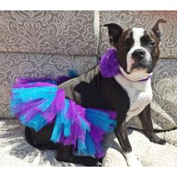 Turquoise and Purple Dog Tutu