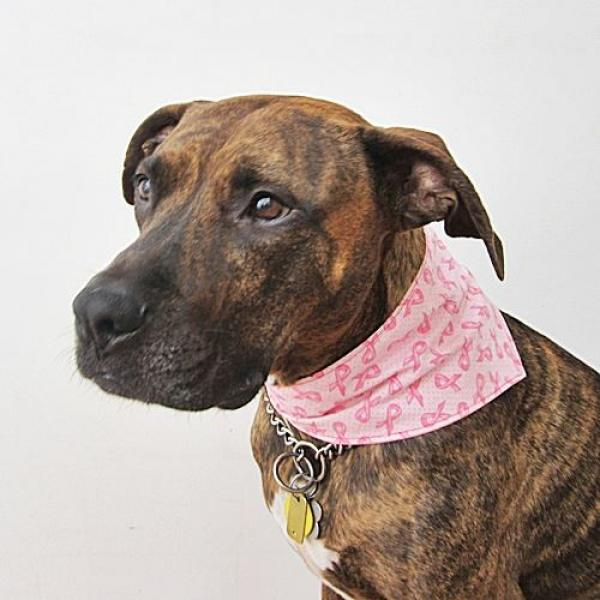 Breast Cancer Awareness Dog Bandana