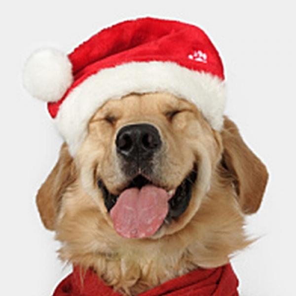 Pictures Of Dogs Wearing Santa Hats