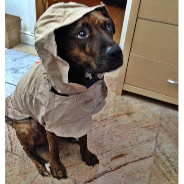M, L ThunderCoat for Dogs