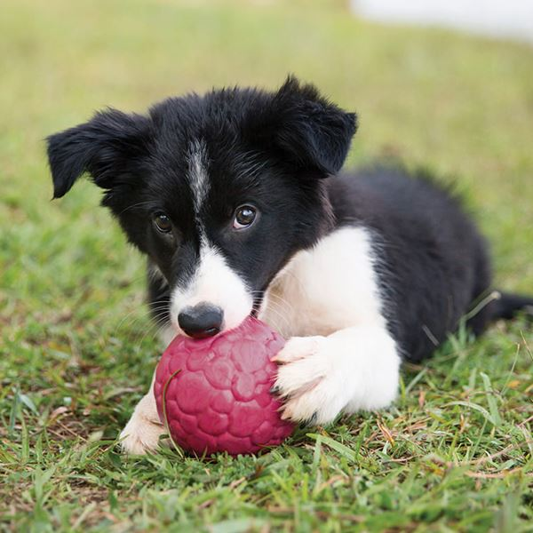 Image result for dog ball