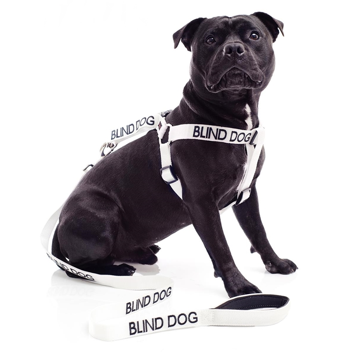 Blind Dog Strap Harness and Leash Set