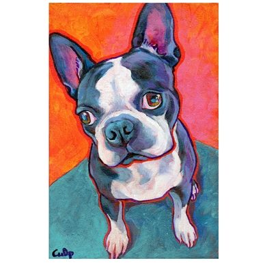Boston Terrier Sitting Print
