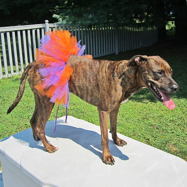 Orange and Purple Tutu