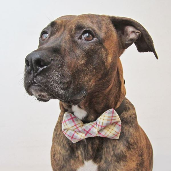 Perfect Plaid Bow Tie