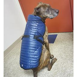 L, XL, XXL Blue Brunswick Puffer Dog Coat