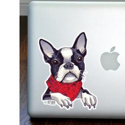 Boston Terrier Wearing Scarf Full Color Large Decal