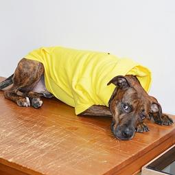 XL Yellow Fleece Doggie Hoodie