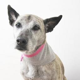 Heather Grey Jersey with Pink Trim Handmade Dog Bandana
