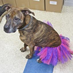 Pink and Purple Dog Tutu