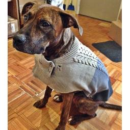 Medium ThunderSweater for Dogs